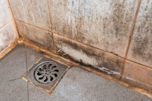 Mold removal can you do it yourself or do you need to call a when household mold growth strikes especially following water damage you have a choice between diy vs professional mold removal solutioingenieria Image collections