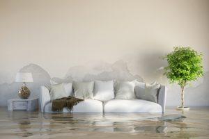 water damage specialist