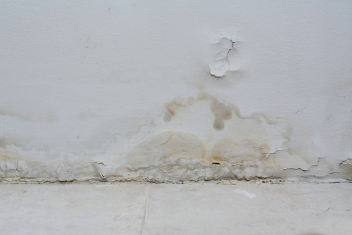 How To Spot Early Signs Of Water Damage Rytech