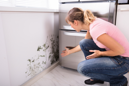 How Does Mold Affect Your Lungs? | Rytech