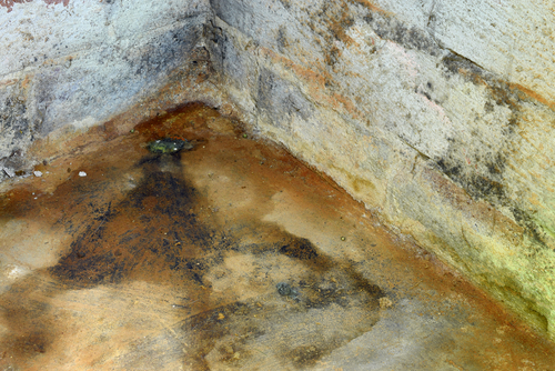 How to Detect and Remove Mold in a Crawl Space