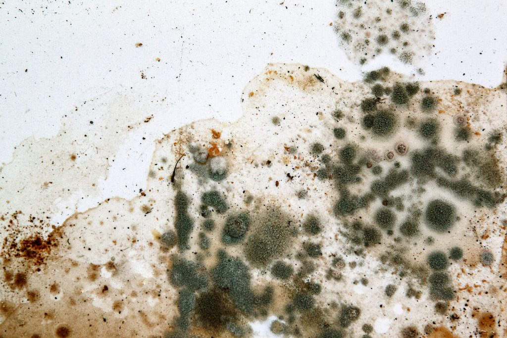 Mold Growth Inside A Home Is Dynamic Process That Requires Very Specific Conditions To Thrive Dormant Spores Exist Everywhere In Nature