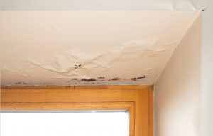 water damage recovery