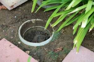 sewer line clog