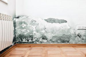 mold inside walls